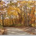 秋・木の実落つ