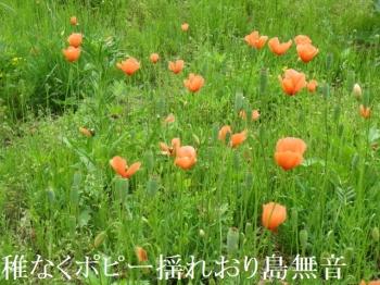Photo_20200724211501